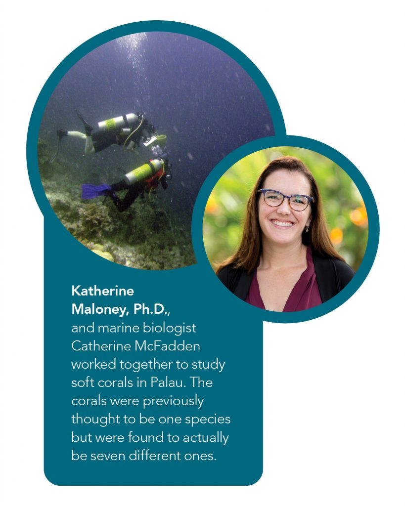 Katherine Maloney, Ph.D., and marine biologist Catherine McFadden worked together to study soft corals in Palau. The corals were previously thought to be one species but were found to actually be seven different ones.
